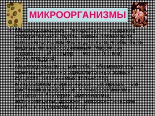 МИКРООРГАНИЗМЫ Микрооргани́змы, (микро́бы) — название собирательной группы жи
