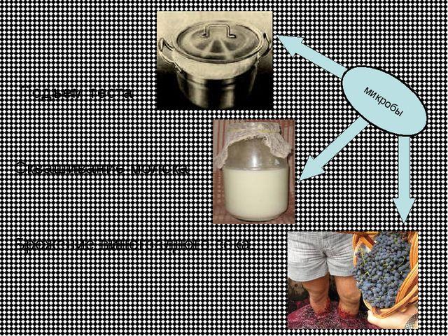 Подъем теста Сквашивание молока Брожение виноградного сока. микробы