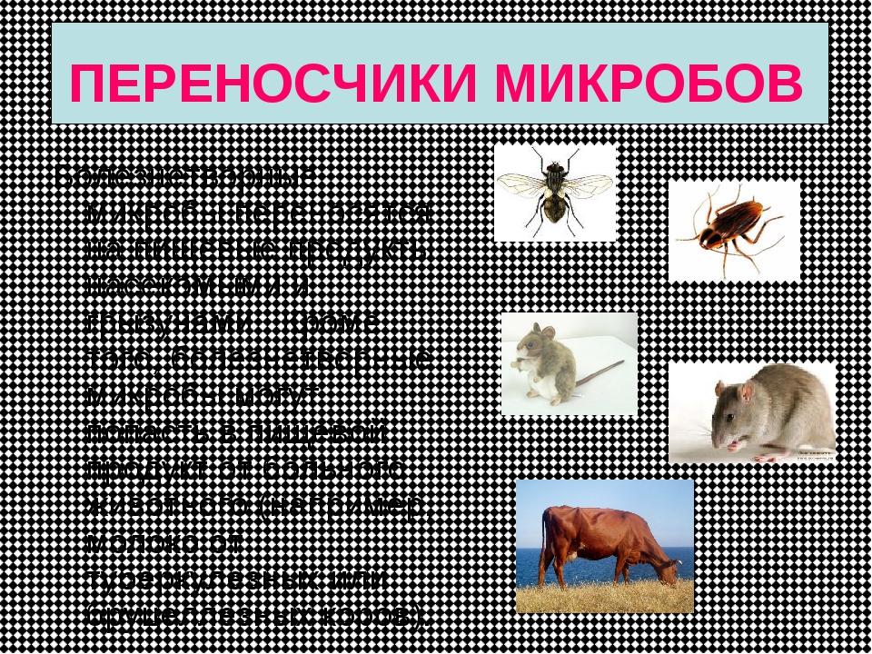 ПЕРЕНОСЧИКИ МИКРОБОВ Болезнетворные микробы переносятся на пищевые продукты н...