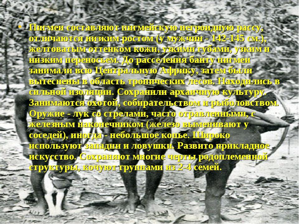 Пигмеи составляют пигмейскую негроидную рассу, отличаются низким ростом (у му...