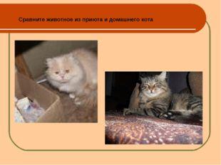 Сравните животное из приюта и домашнего кота