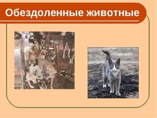 Обездоленные животные