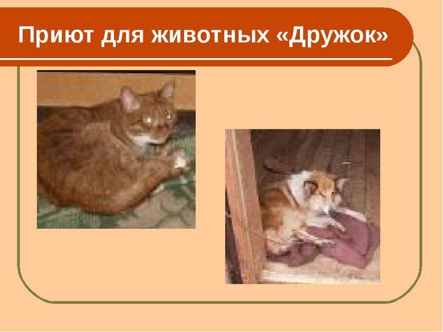 Приют для животных «Дружок»