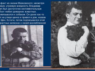Интересный факт из жизни Маяковского: несмотря на свою суровую, угрюмую внешн