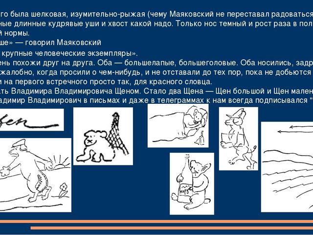 Шерсть у него была шелковая, изумительно-рыжая (чему Маяковский не перестава...