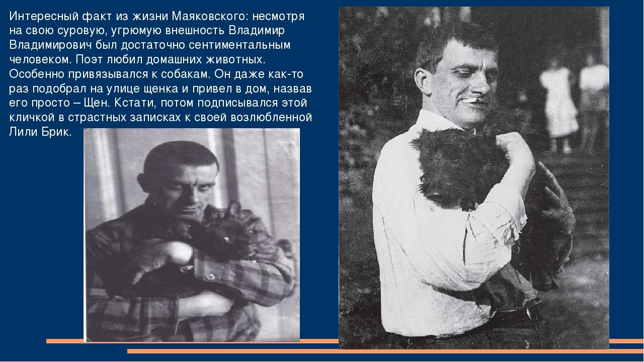 Интересный факт из жизни Маяковского: несмотря на свою суровую, угрюмую внешн...