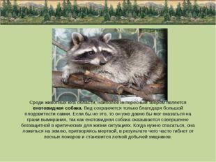 Среди животных юга области, наиболее интересным зверем является енотовидная с