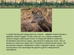 А самый маленький представитель оленей – кабарга также обитает в районах горн