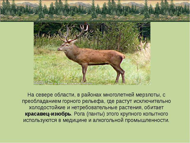 На севере области, в районах многолетней мерзлоты, с преобладанием горного р...