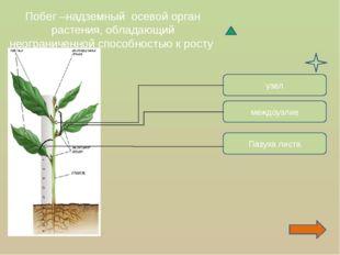 Побег –надземный осевой орган растения, обладающий неограниченной способность