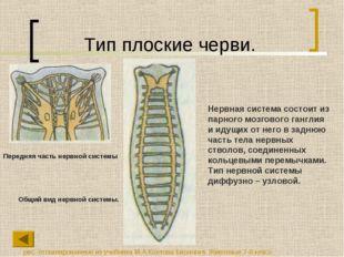 Тип плоские черви. Нервная система состоит из парного мозгового ганглия и иду