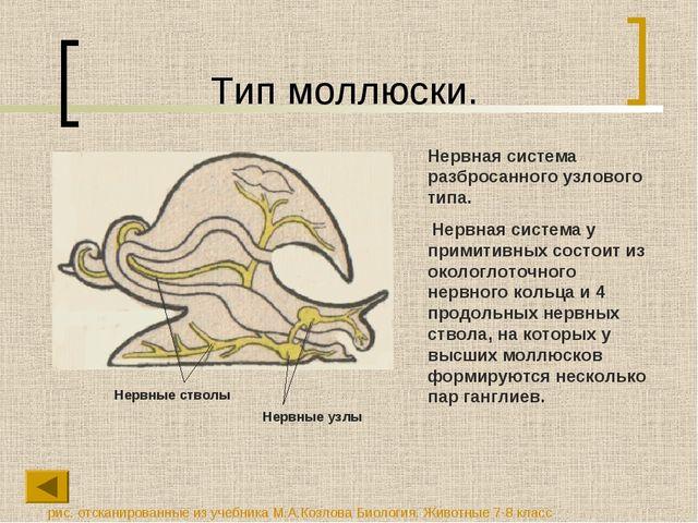Тип моллюски. Нервная система разбросанного узлового типа. Нервная система у...