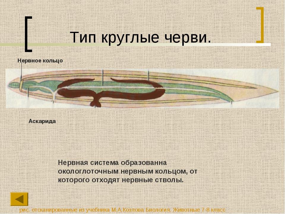 Тип круглые черви. Нервная система образованна окологлоточным нервным кольцом...