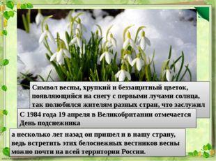 Символ весны, хрупкий и беззащитный цветок, появляющийся на снегу с первыми л