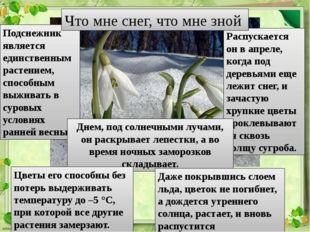 Подснежник является единственным растением, способным выживать в суровых усло