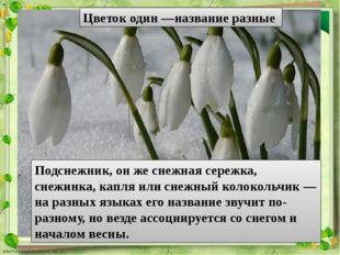 Цветок один —название разные Подснежник, он же снежная сережка, снежинка, кап