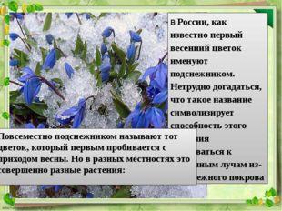 В России, как известно первый весенний цветок именуют подснежником. Нетрудно
