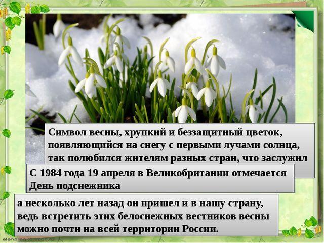 Символ весны, хрупкий и беззащитный цветок, появляющийся на снегу с первыми л...