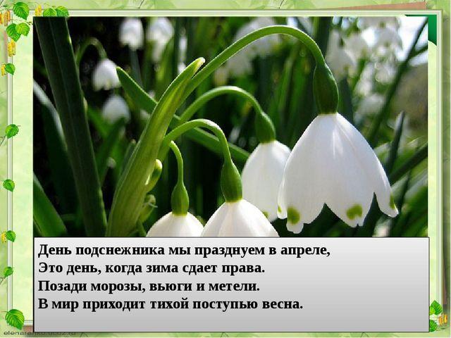День подснежника мы празднуем в апреле, Это день, когда зима сдает права. Поз...