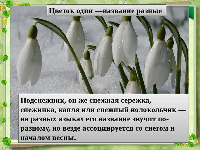 Цветок один —название разные Подснежник, он же снежная сережка, снежинка, кап...