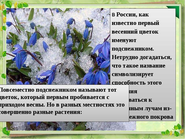В России, как известно первый весенний цветок именуют подснежником. Нетрудно...