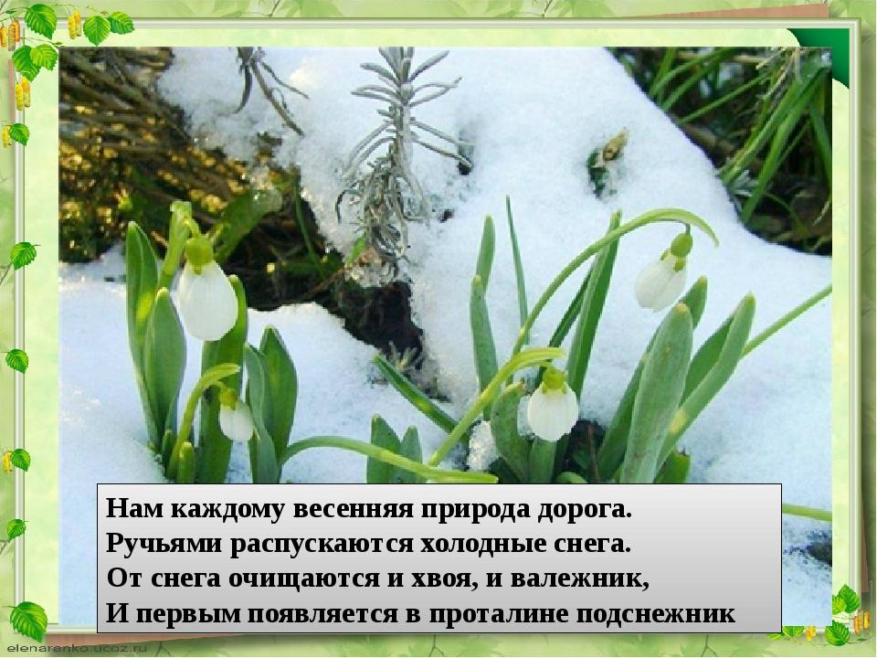 Нам каждому весенняя природа дорога. Ручьями распускаются холодные снега. От...