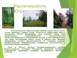 Растительность Югры Растительность представлена сообществами лесов, болот, лу