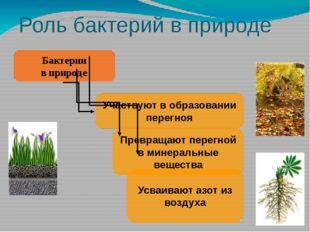 Роль бактерий в природе Бактерии в природе Участвуют в образовании перегноя П