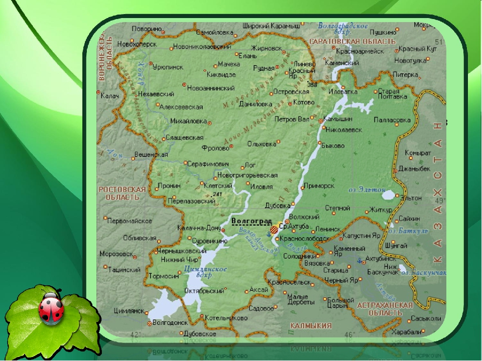 Природа нашего края удивительна и разнообразна. Глядя на карту Волгоградской...