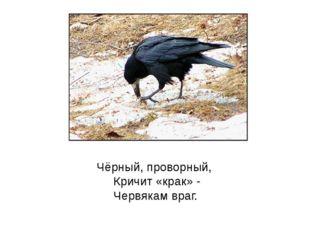 Чёрный, проворный, Кричит «крак» - Червякам враг.