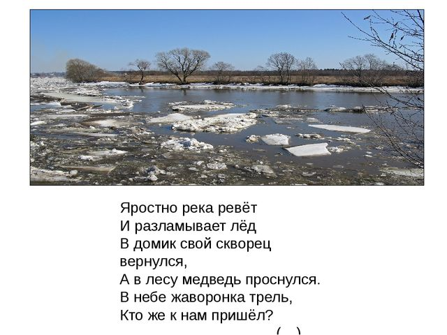 Яростно река ревёт И разламывает лёд В домик свой скворец вернулся, А в лесу...