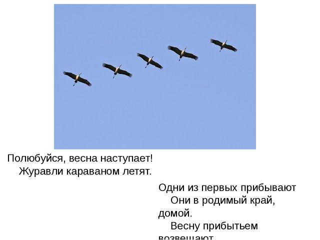 Полюбуйся, весна наступает! Журавли караваном летят. Одни из первых прибывают...