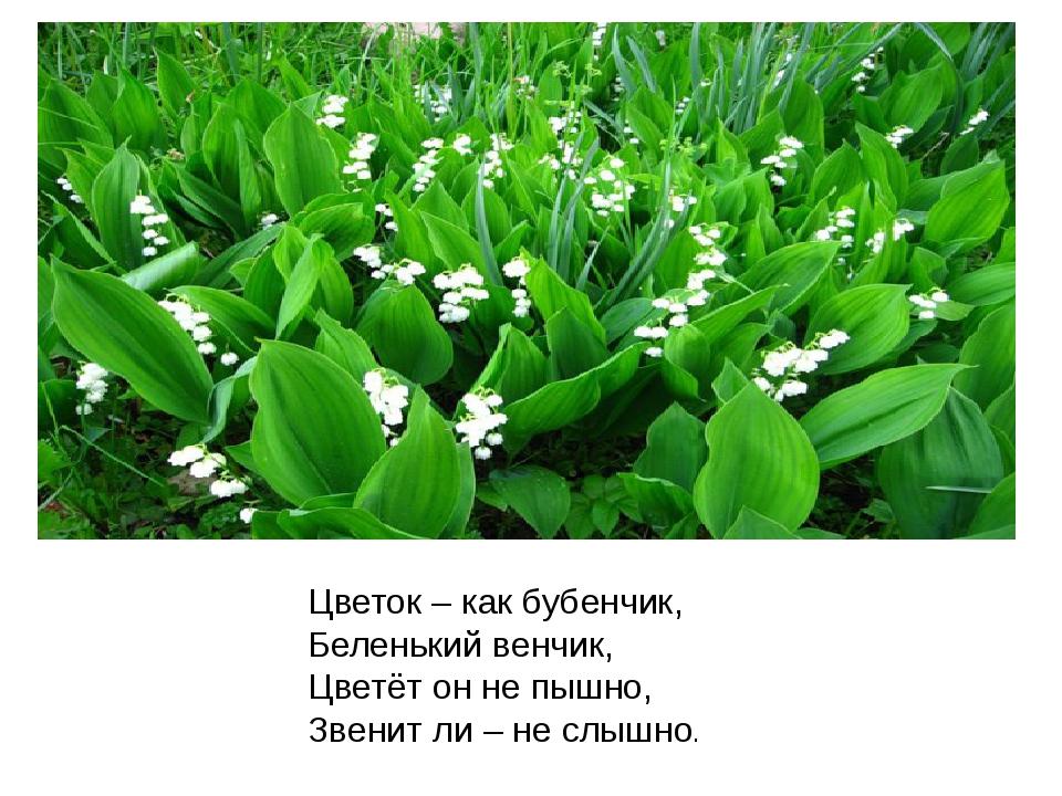 Цветок – как бубенчик, Беленький венчик, Цветёт он не пышно, Звенит ли – не с...