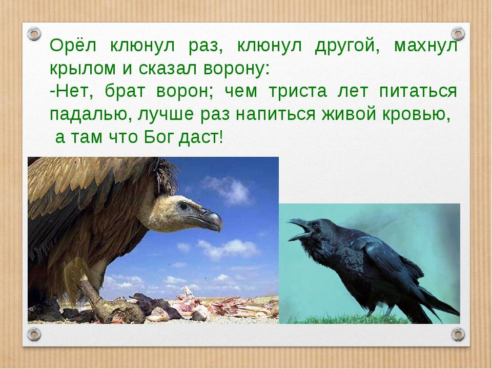 Орёл клюнул раз, клюнул другой, махнул крылом и сказал ворону: -Нет, брат вор...
