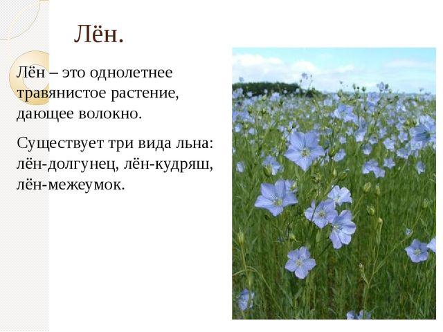 Лён. Лён – это однолетнее травянистое растение, дающее волокно. Существует тр...