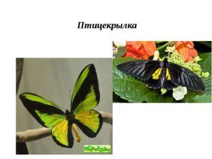 Птицекрылка