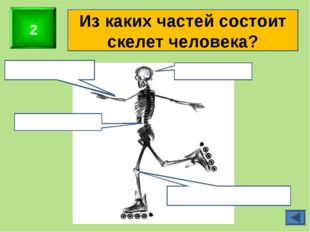 2 Из каких частей состоит скелет человека? Скелет головы Скелет верхних конеч