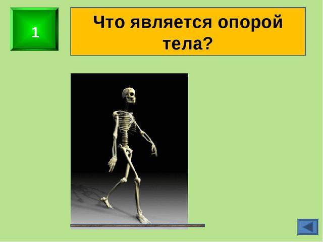 1 Что является опорой тела?