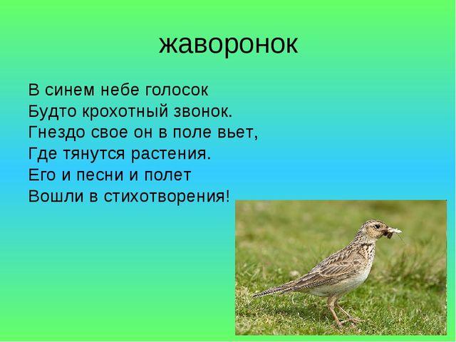 жаворонок В синем небе голосок Будто крохотный звонок. Гнездо свое он в поле...