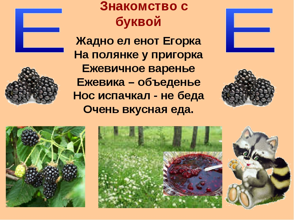 Знакомство с буквой Жадно ел енот Егорка На полянке у пригорка Ежевичное варе...
