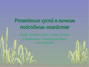 Разведение гусей в личном подсобном хозяйстве Автор :Фомина Алина, ученица 3к