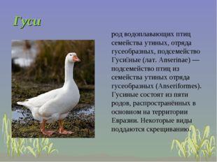* род водоплавающих птиц семейства утиных, отряда гусеобразных, подсемейство