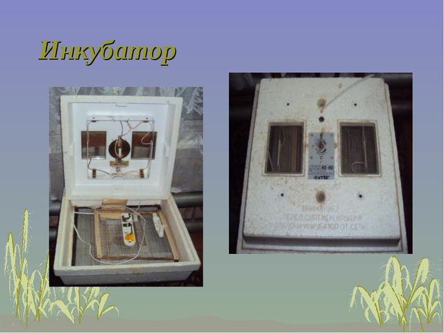 Инкубатор В этом приборе мы выпаривали птенцов из яиц, снесенных нашей гусыней.