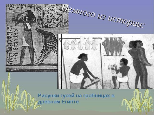 Немного из истории: Рисунки гусей на гробницах в древнем Египте