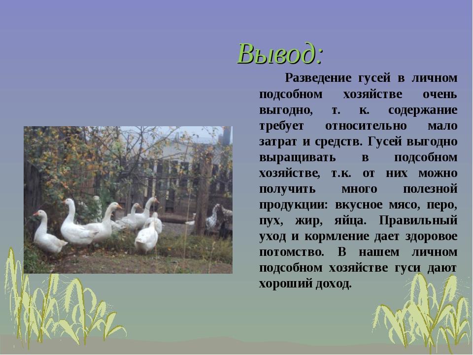 Вывод: Разведение гусей в личном подсобном хозяйстве очень выгодно, т. к. со...