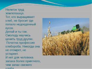 Нелегок труд землепашца. Тот, кто выращивает хлеб, не бросит где попало недое