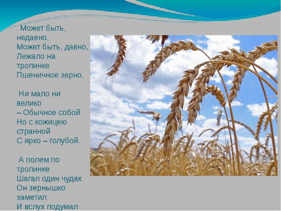 .Может быть, недавно, Может быть, давно, Лежало на тропинке Пшеничное зерно....