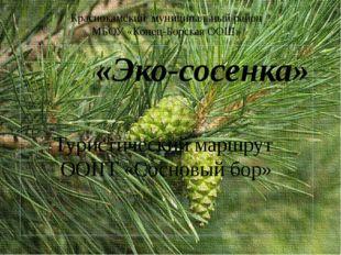 «Эко-сосенка» Краснокамский муниципальный район МБОУ «Конец-Борская ООШ» Тури