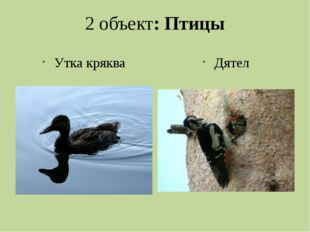 2 объект: Птицы Утка кряква Дятел