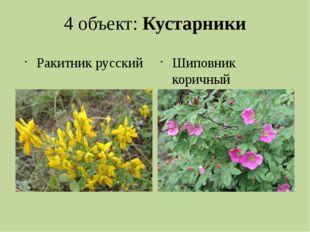 4 объект: Кустарники Ракитник русский Шиповник коричный